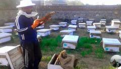 Organic & Pure Honey