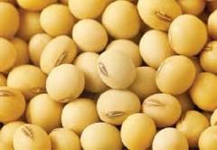 Soybean Pulse