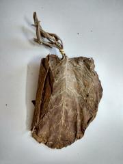 Motihari Rustica Tobacco