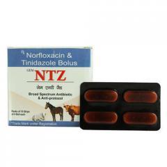 NTZ (Norfloxacin Tinidazole) Bolus