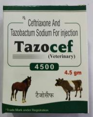 Tazocef  Injection