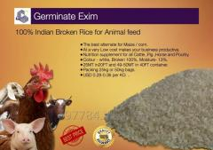 100% best Quality Indian Rice for Pig feed and