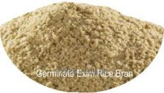 Rice Bran for rice bran oil