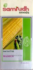 Sweet corn seeds Madhur