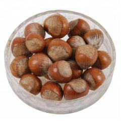 Best Quality Dried Hazel Nuts