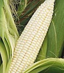 Frozen white corn