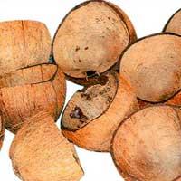 Raw Coconut Shell