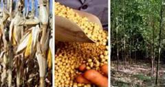 Biodiesel - all ingredients