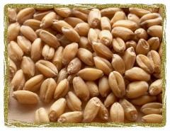 Wheat (Agricultural Product)