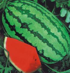 Water Melon F-1 GS 786