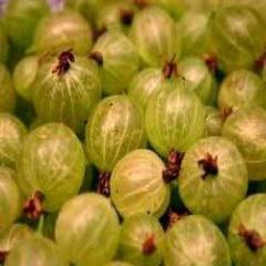 Indian Gooseberries (Amla)