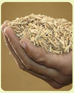 Barley Dalia Porridge