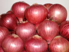 Onion seeds - Orinet