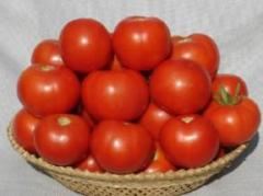 Tomato seeds - NS 539 (6H 139)