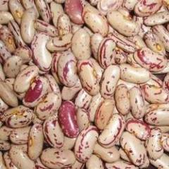 Light Speckled Kidney Beans