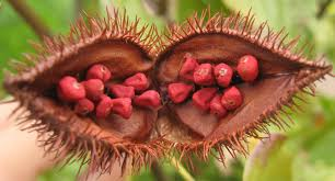 annatto_seeds