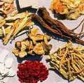 Seeds & Roots Herbs