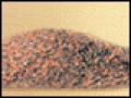 Seedlac