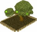 Apple Plant Tree