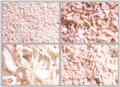 Onion Dehydrated Products