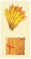 Flue cured virginia (FCV)