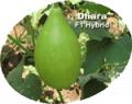 Vegetable Crops(Dhara)