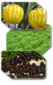 Standardized Phyto Extracts - Nutraceuticals