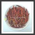 Chilli ( spices) ( Capsicum annum L.,Capsicum frutescens L.)