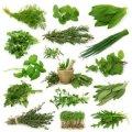 All Kind Of Ayurvedic Herbs