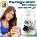 Damage Knee Cartilage Curing Drugs