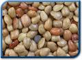 Culturi cereale