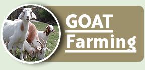 Order Goat Farming