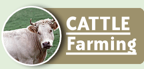 Order Cattle Farming