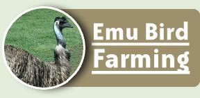 Order Emu Bird Farming