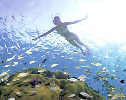 Order Scuba Diving in Andaman Islands