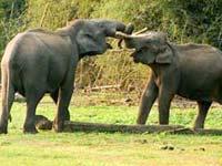 Order Indian Wildlife Tour