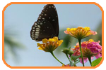 Order Butterfly tours