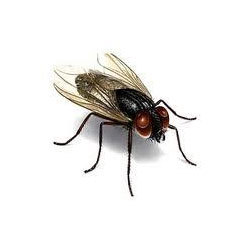 Order Fly Control Services