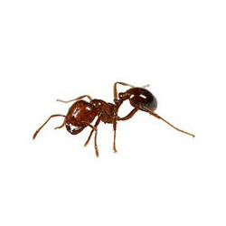 Order Ant Control Services