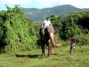Order Tours - Sri Lanka 4 Days