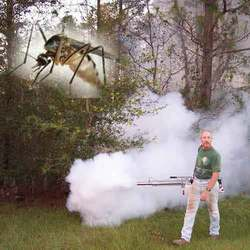 Order Fogging For Mosquito Controls