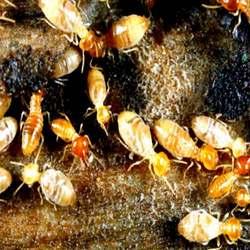Order Termite Control Services