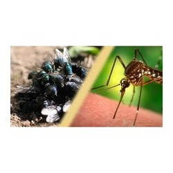Order Mosquito & Flies Control Treatment