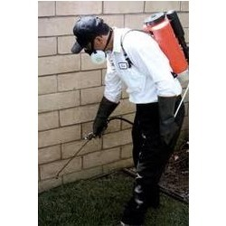 Order Rodent Control Treatment Services