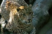 Order Wildlife tour