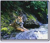 Order Wild life tour - Land of tigers