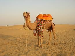 Order Golden Triangle with camel safari tour