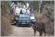 Order Wildlife tours - Fascinating Tigers of India