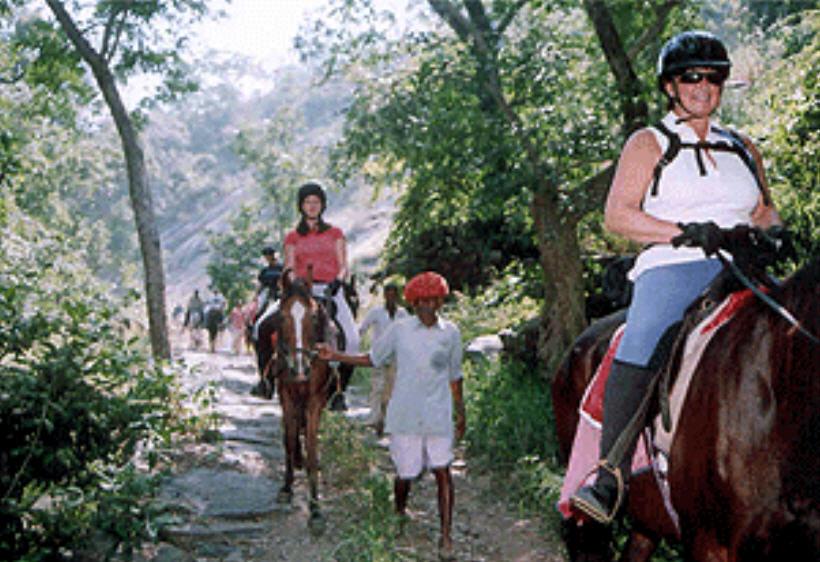 Order Horse Safari Tour