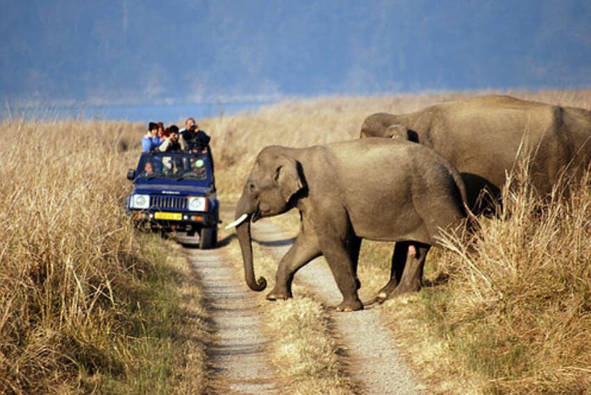 Order Wildlife Tours Rajasthan